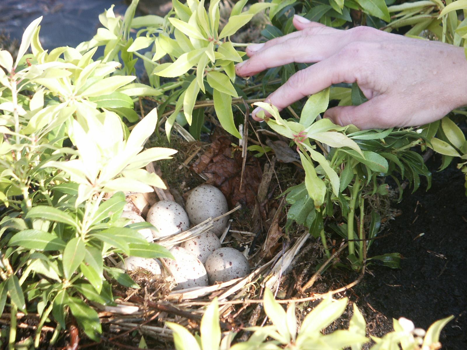 future-islands nest