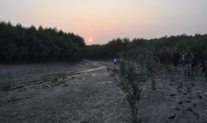 Sundarban1